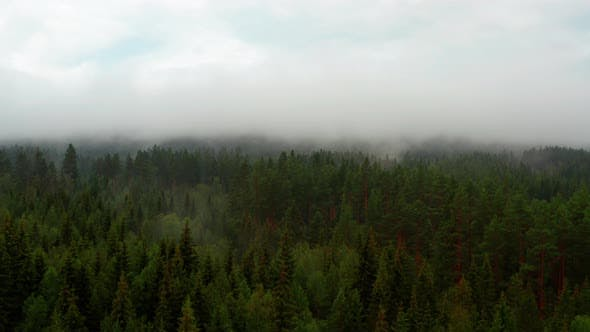 Clear Skies and Foggy Forest Trees in Norway