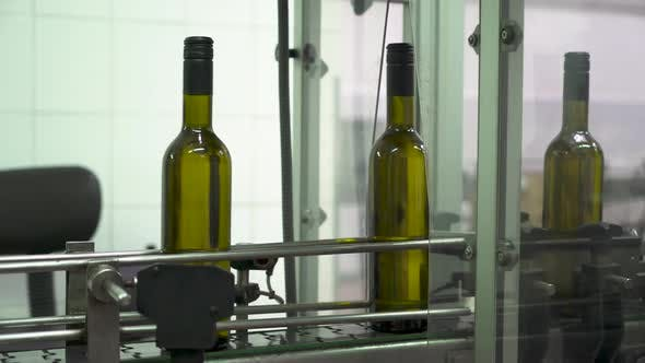 Thumbnail for Green Bottles Move Along the Automated Conveyor at a Wine Bottling Factory