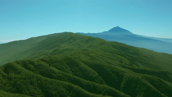 Thumbnail for Aerial View. Dense Pine Tree Forest on Tenerife on the Background of the Volcano Teide.
