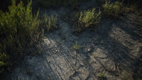 Thumbnail for . Cracked Soil. Green Grass. Moving Shadow.