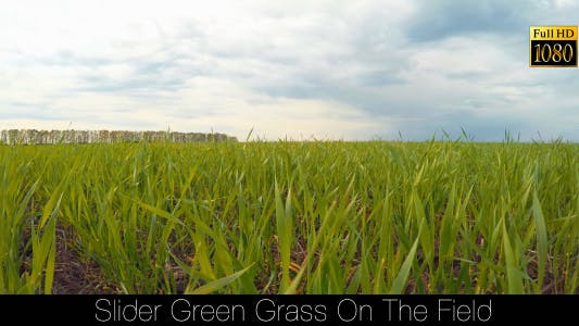 Thumbnail for Slider Green Grass On The Field 2