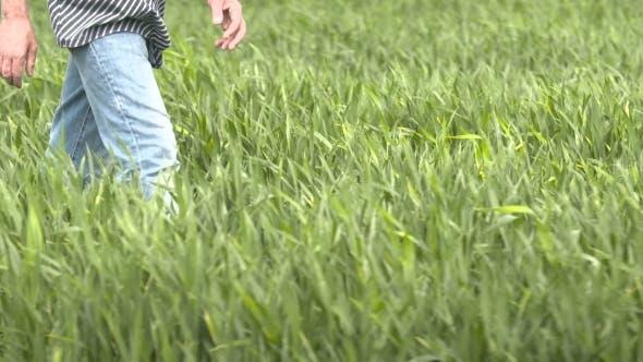 Thumbnail for Farmer Walking In Wheat Field At