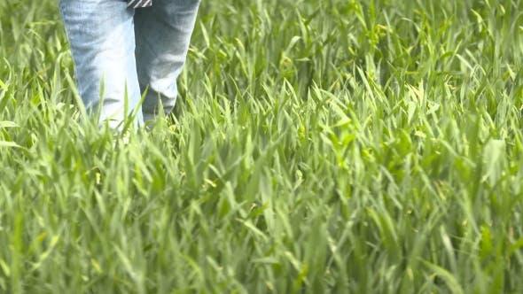 Thumbnail for Farmer Walking In Wheat Field