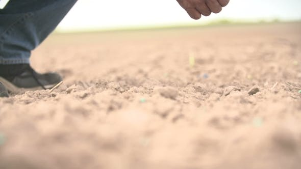 Thumbnail for Farmer Hand Seeding Peanut  Shoot