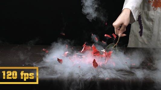 Liquid Nitrogen Freezes Flower