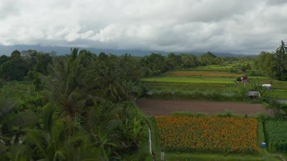 Farmers Cultivating Farm Paddy Fields in Rural Bali Countryside