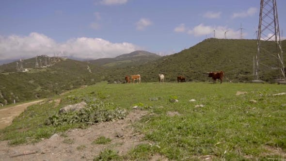 Thumbnail for View Of Cattle Grazing On Hill Near Wind Turbines