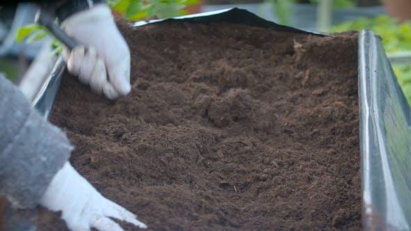 Thumbnail for Potting Young Tomato Plants