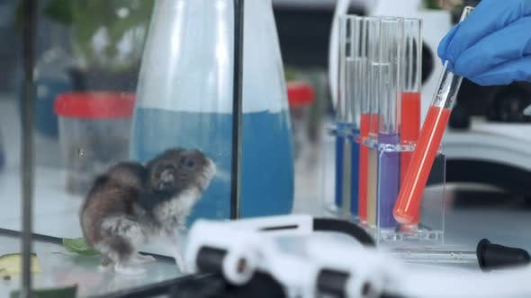 Thumbnail for Close-up of Working Process in Chemistry Laboratory with Test Tubes, Mice and Modern Instruments