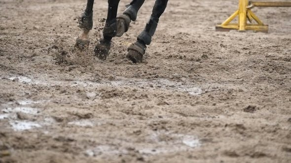 Thumbnail for Feet of Horse Running on Mud