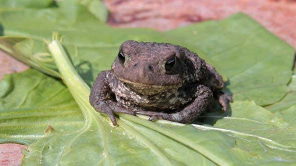 Cover Image for Toad on Green Leaf of Plant