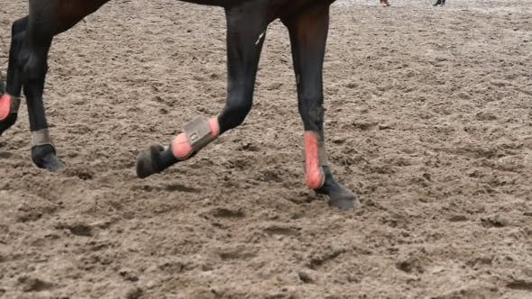 Cover Image for Foot Of Horse Running On Mud
