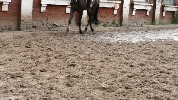 Thumbnail for Foot Of Horse Running On Mud.  Of Legs Galloping On The Wet Muddy Ground.
