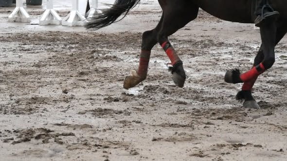 Thumbnail for Foot of Horse Running on Mud. Legs Galloping on The Wet Muddy Ground.