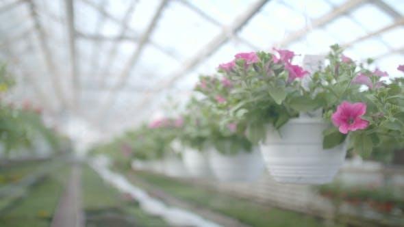 Thumbnail for Flower Plants