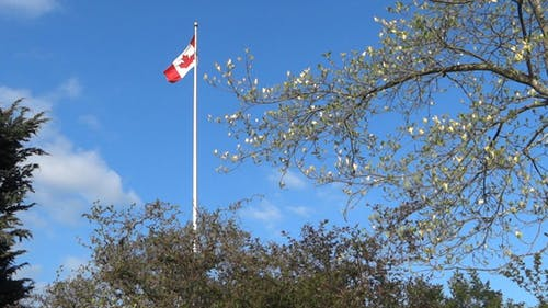 Canada Flag and Spring Trees
