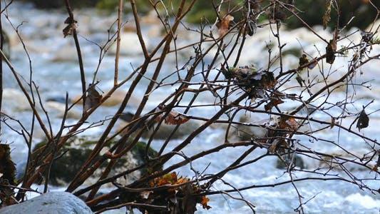 Thumbnail for Mountain River - Autumn Plants - 02
