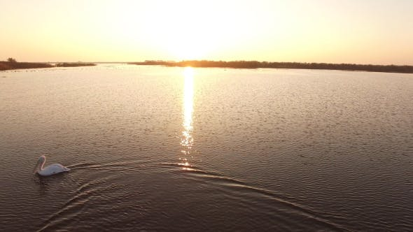 Thumbnail for Aerial view of Danube Delta national park at sunrise with various type of birds 5