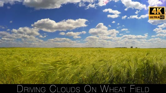 Thumbnail for Driving Clouds On Wheat Field