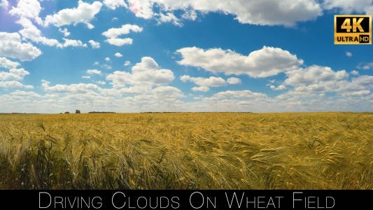 Thumbnail for Driving Clouds On Wheat Field 2