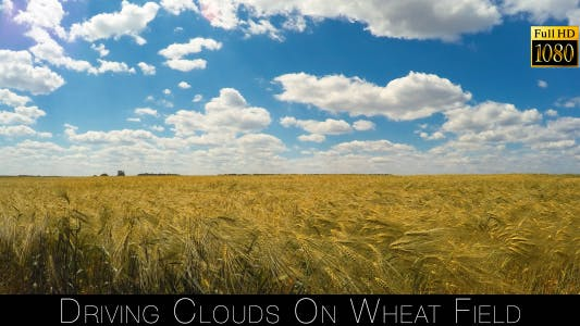 Cover Image for Driving Clouds On Wheat Field 2