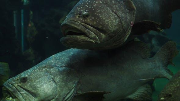 Thumbnail for Big Fish In Aquarium