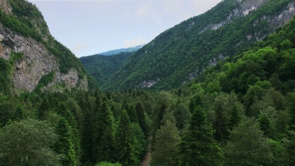 Thumbnail for Aerial View Under Green Coniferous Forest In Mountain