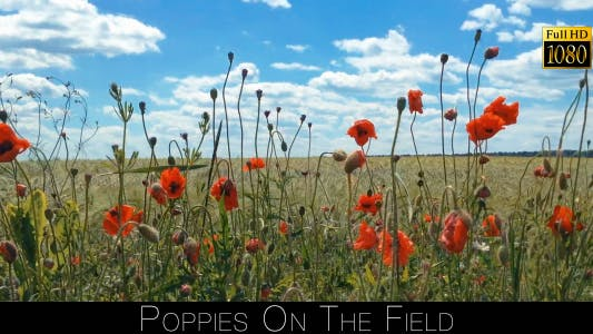 Thumbnail for Poppies On The Field 3