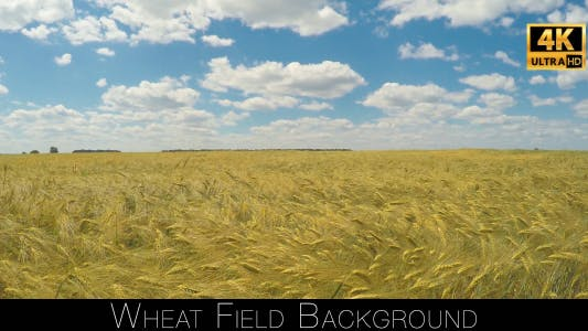 Thumbnail for Wheat Field Background
