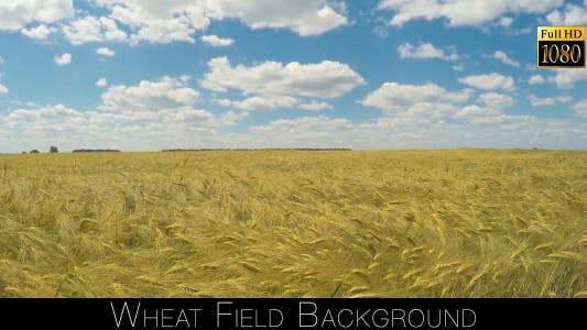 Cover Image for Wheat Field Background