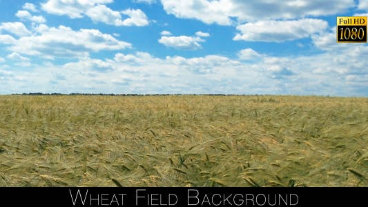 Thumbnail for Wheat Field Background 2