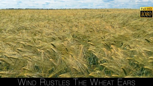Cover Image for Wind Rustles The Wheat Ears 2
