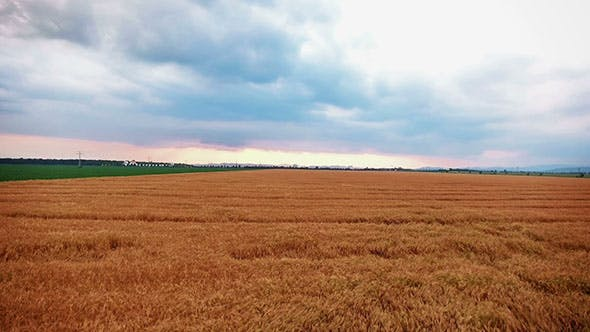 Thumbnail for Flying Over A Field Of Wheat