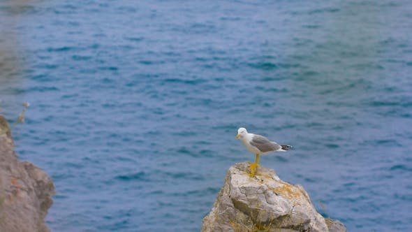 Cover Image for Seagull Standing On a Rock By The Sea