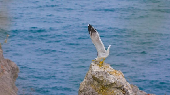 Thumbnail for Seagull Standing On a Rock By The Sea