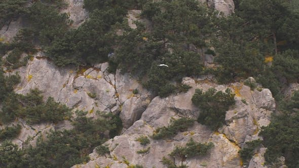 Thumbnail for Seagull Flying On The Background Of Rocks And Trees.
