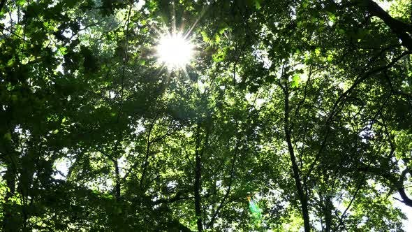 Thumbnail for Autumn Sun Rays Among The Branches Of The Trees