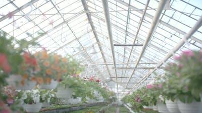 Tracking Shot On Flower Plant