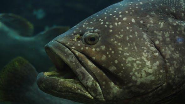 Thumbnail for Fish In Aquarium