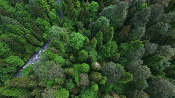 Cover Image for Aerial View Under Green Coniferous Forest In Mountain