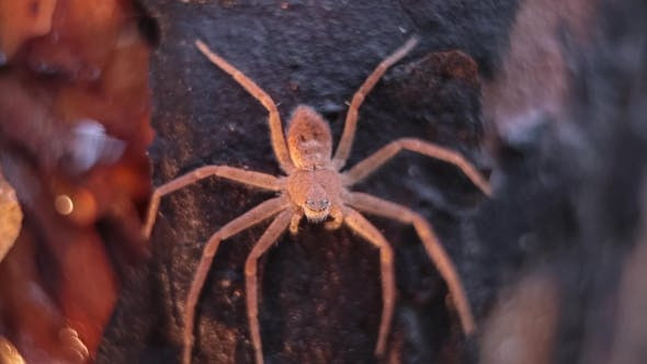 Spider On a Tree Trunk