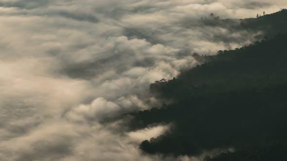 Thumbnail for Fog Forest Night
