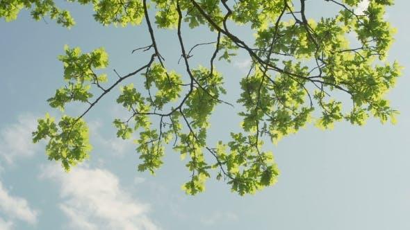 Thumbnail for Sonne scheint durch grüne Blätter