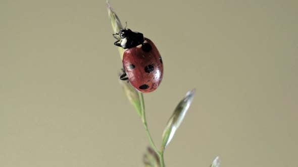 Cover Image for Ladybug Crawling on a Plant