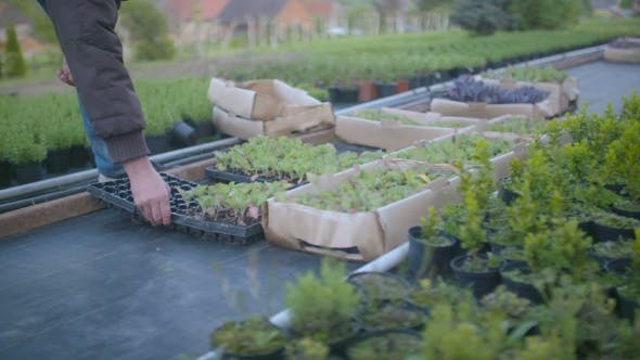 Thumbnail for Farmer Picking Up Seedling Tray In Greenhouse