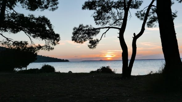 Thumbnail for Silhouettes Of Maritime Pine Trees With The Sunset Over The Sea.