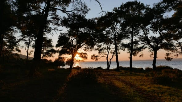 Thumbnail for View At The Sunset And Sea Coast Through The Pine Forest.