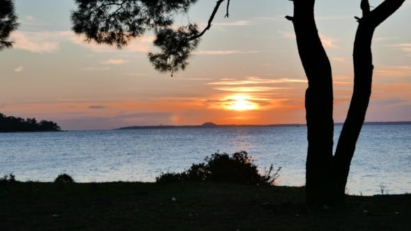 Thumbnail for Pine Tree Silhouette With Sunset Over The Sea.
