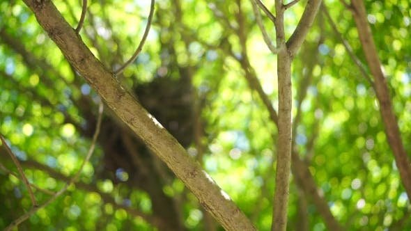 Thumbnail for Tree Branches With Green Leaves