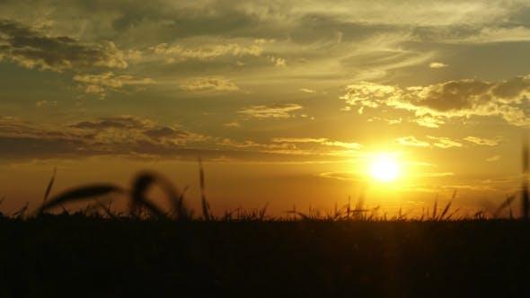 Thumbnail for Beautiful Summer Sunset